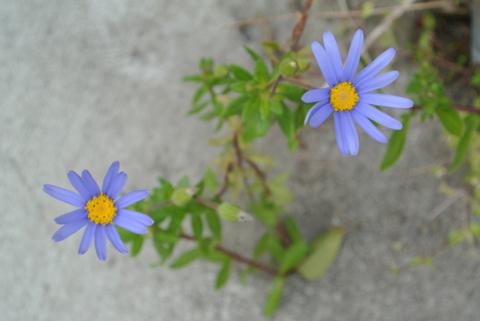 ウチのドアの前の花